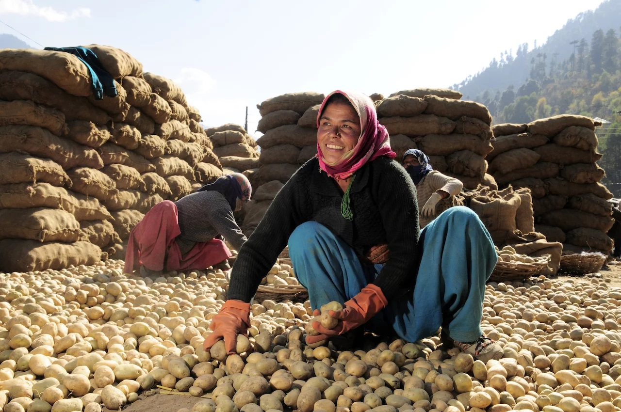 Potato farmers in himachal pradesh