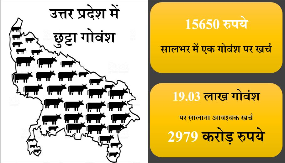 stray cattle and cost on stray cattle in UP